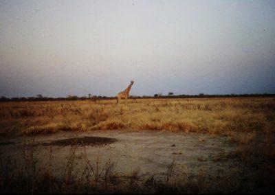 Africa-Giraffe-SMALL-1024x682